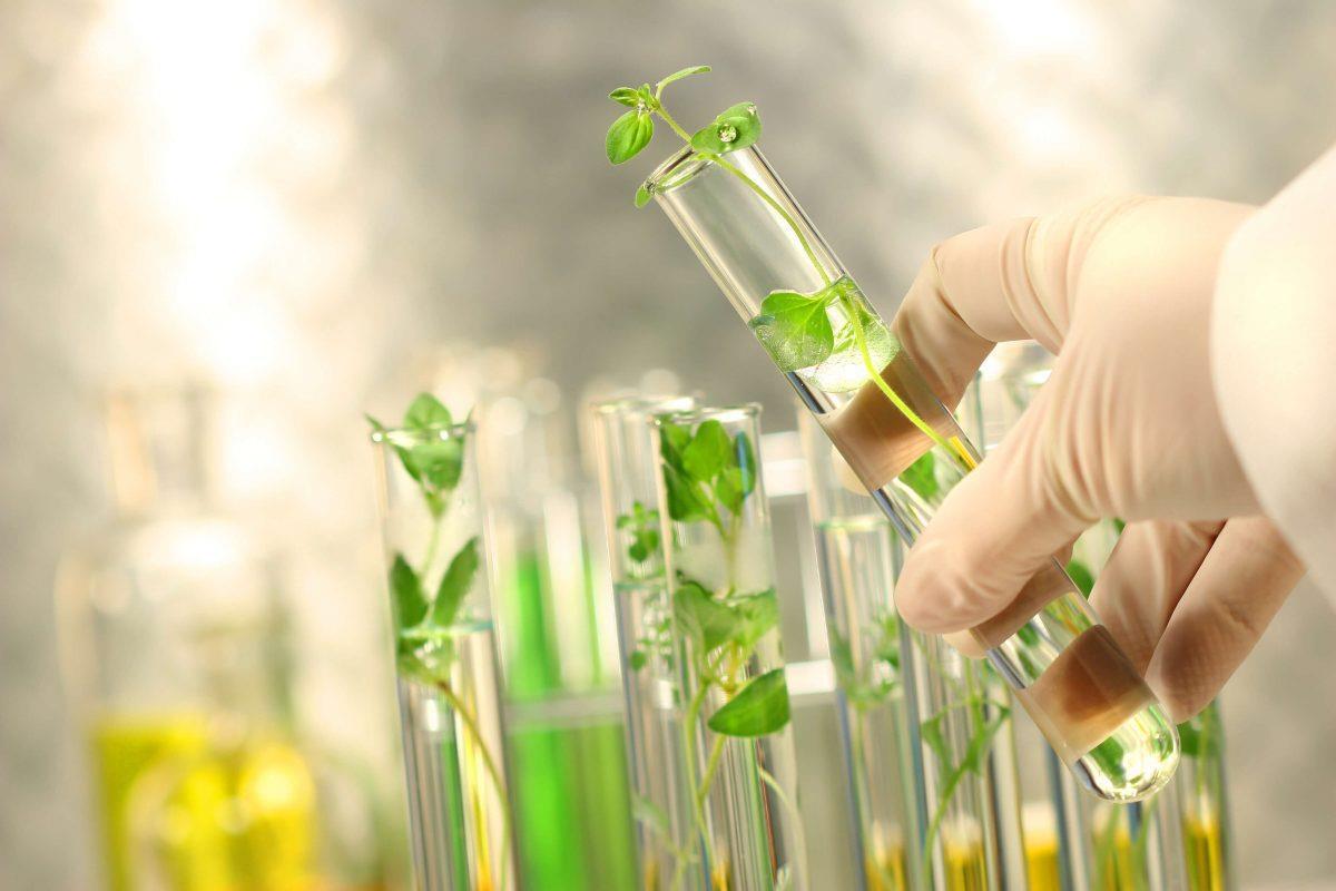 Mỹ phẩm chiết xuất từ tế bào gốc noãn thực vật: lựa chọn mới khắc phục các vấn đề lão hóa của làn da - Ảnh 1.