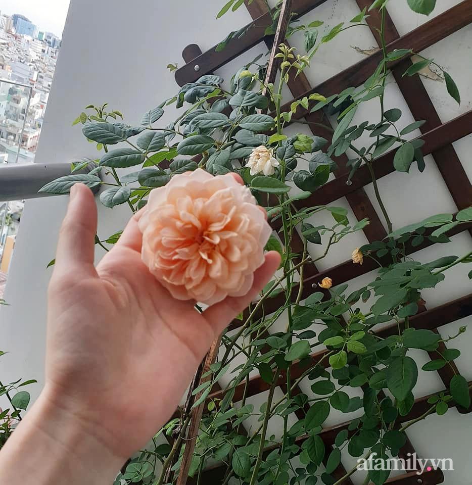 Bà mẹ trẻ Sài Gòn biến ban công trống trơn thành khu vườn ngập tràn hoa lá chỉ với 2,2 triệu đồng - Ảnh 13.