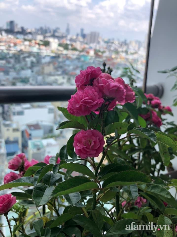 Bà mẹ trẻ Sài Gòn biến ban công trống trơn thành khu vườn ngập tràn hoa lá chỉ với 2,2 triệu đồng - Ảnh 10.