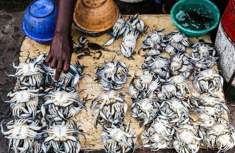 Ghé khu chợ này bạn mua được hải sản kích thước khủng rẻ hơn rau, tôm hùm chỉ khoảng 100 nghìn/kg - Ảnh 6.
