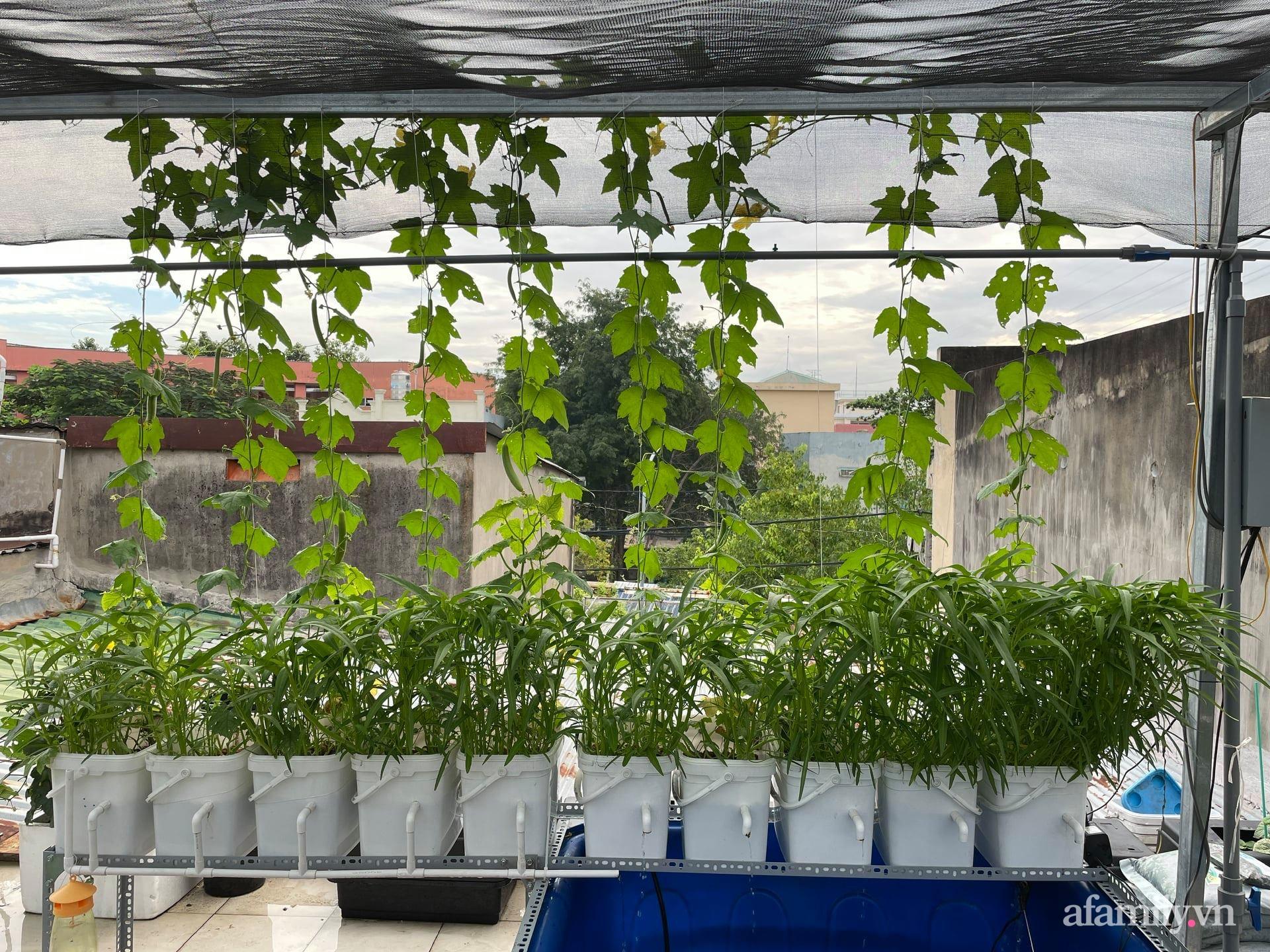 Sân thượng 100m² trồng rau nuôi cá với tổng chi phí đầu tư 80 triệu đồng ở quận 12 Sài Gòn - Ảnh 4.