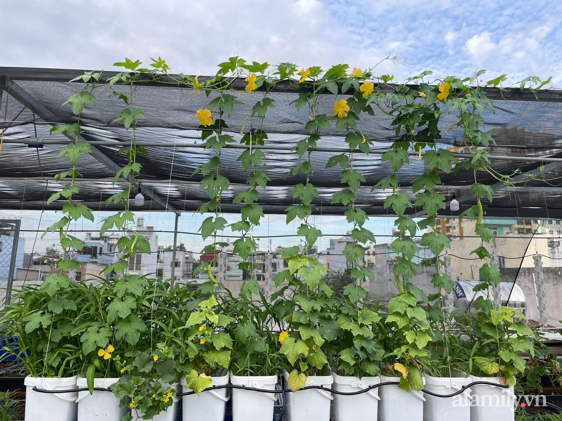 Sân thượng 100m² trồng rau nuôi cá với tổng chi phí đầu tư 80 triệu đồng ở quận 12 Sài Gòn - Ảnh 3.