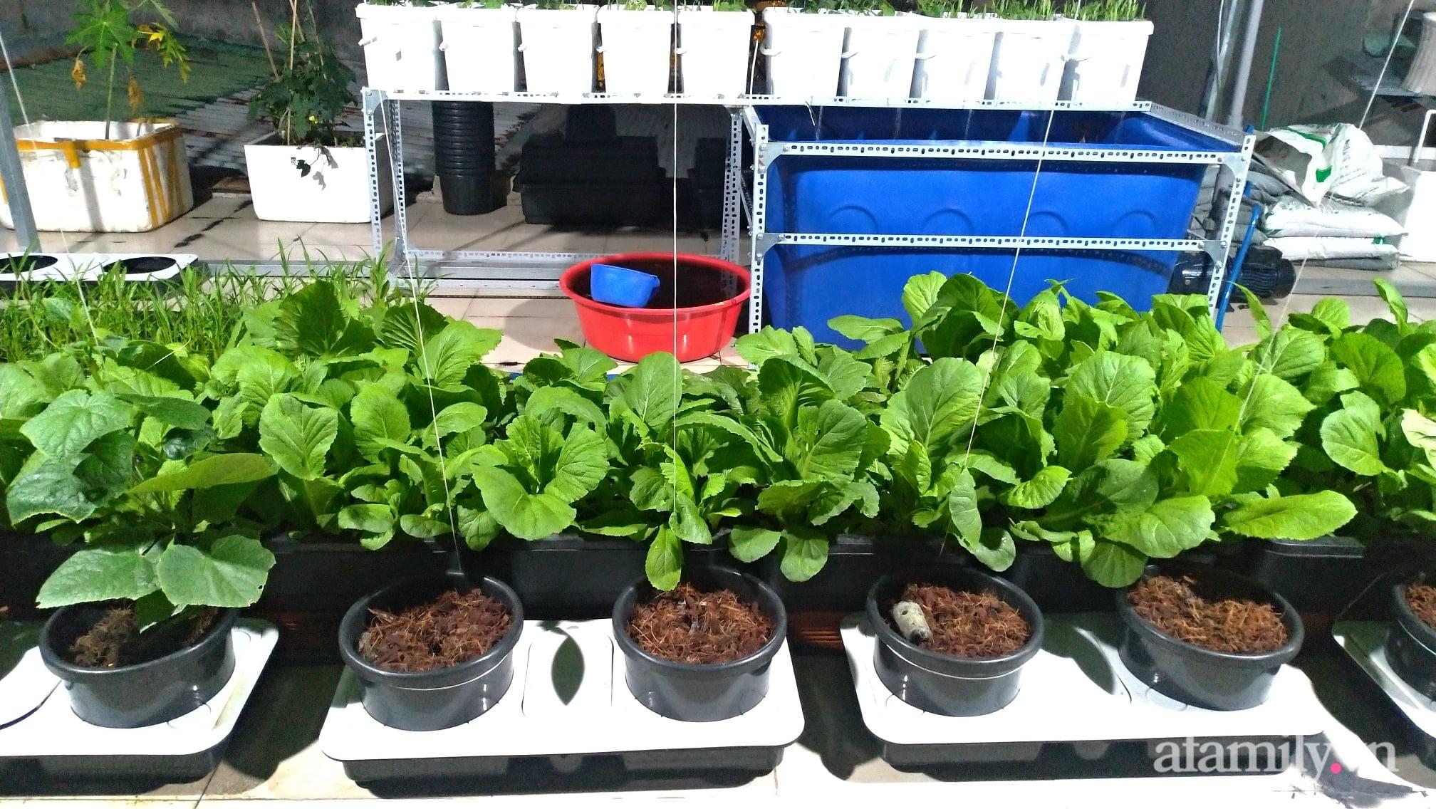 Sân thượng 100m² trồng rau nuôi cá với tổng chi phí đầu tư 80 triệu đồng ở quận 12 Sài Gòn - Ảnh 2.