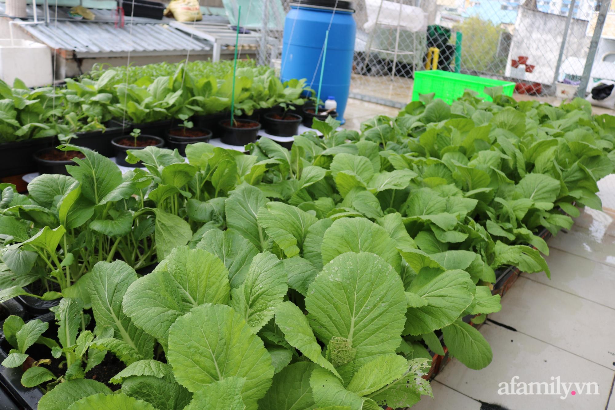 Sân thượng 100m² trồng rau nuôi cá với tổng chi phí đầu tư 80 triệu đồng ở quận 12 Sài Gòn - Ảnh 6.