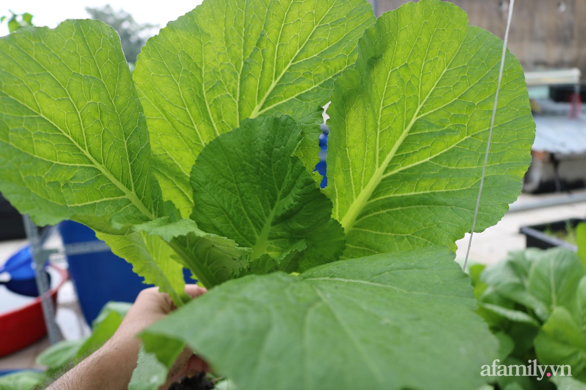 Sân thượng 100m² trồng rau nuôi cá với tổng chi phí đầu tư 80 triệu đồng ở quận 12 Sài Gòn - Ảnh 19.