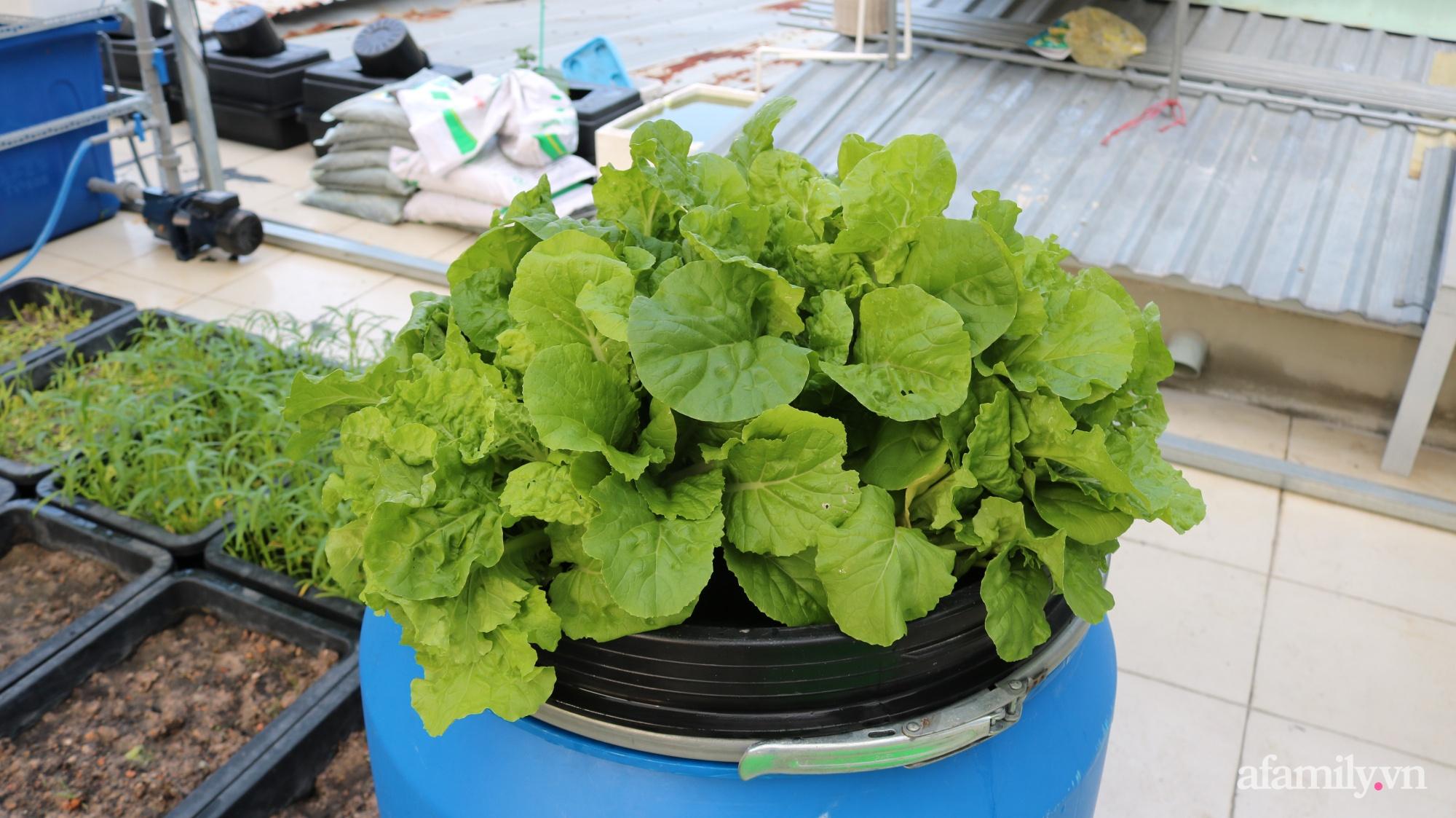 Sân thượng 100m² trồng rau nuôi cá với tổng chi phí đầu tư 80 triệu đồng ở quận 12 Sài Gòn - Ảnh 15.