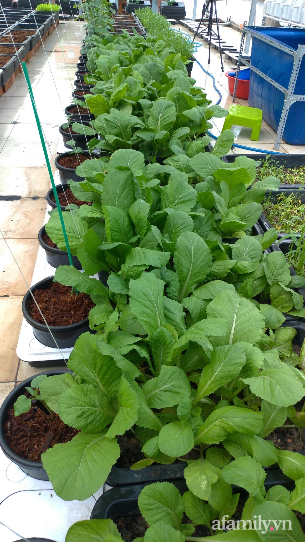 Sân thượng 100m² trồng rau nuôi cá với tổng chi phí đầu tư 80 triệu đồng ở quận 12 Sài Gòn - Ảnh 13.