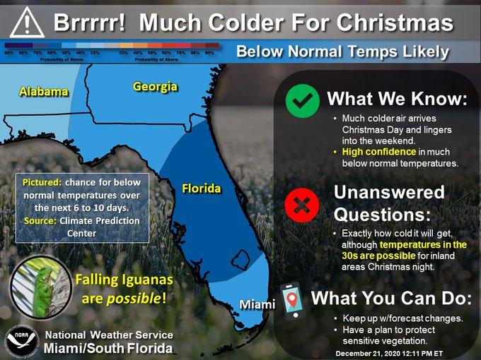 Thay vì tuyết rơi đêm Giáng sinh, người dân Florida nhận một cơn mưa thằn lằn từ trên trời rơi xuống nằm thẳng cẳng đầy đường - Ảnh 1.