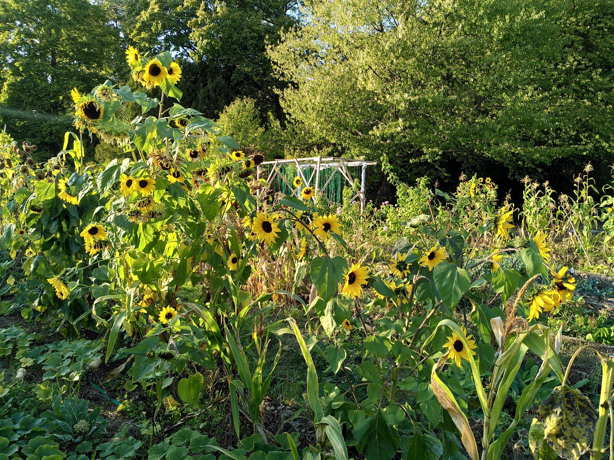 Khu vườn 400m² trăm loại cây đua nhau xanh tốt gắn kết tình yêu của hai cử nhân bỏ phố về quê - Ảnh 5.