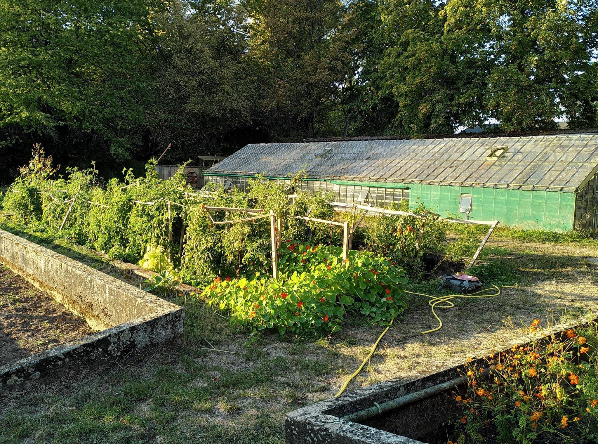 Khu vườn 400m² trăm loại cây đua nhau xanh tốt gắn kết tình yêu của hai cử nhân bỏ phố về quê - Ảnh 3.
