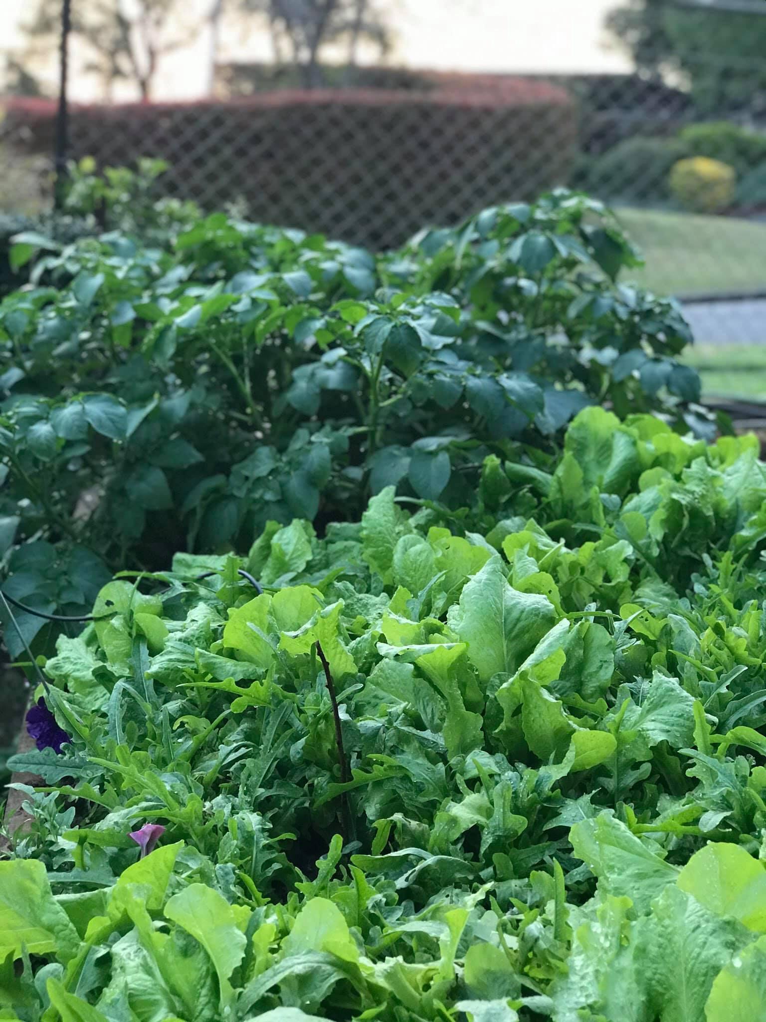 Khu vườn rộng 575m² xanh tươi đủ loại rau quả sạch giữa thành phố của người đàn ông thích trồng cây từ năm 9 tuổi - Ảnh 8.