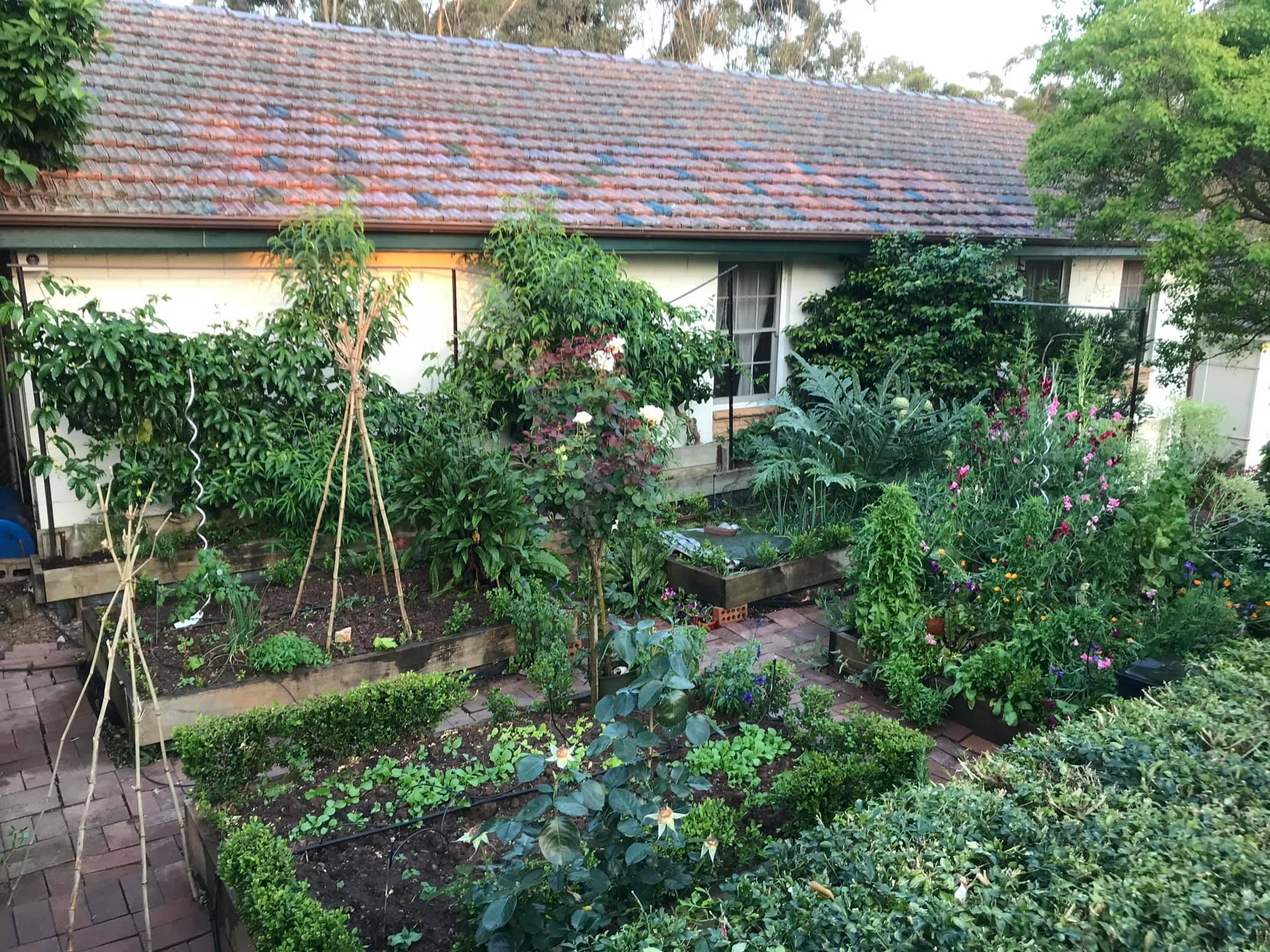 Khu vườn rộng 575m² xanh tươi đủ loại rau quả sạch giữa thành phố của người đàn ông thích trồng cây từ năm 9 tuổi - Ảnh 1.
