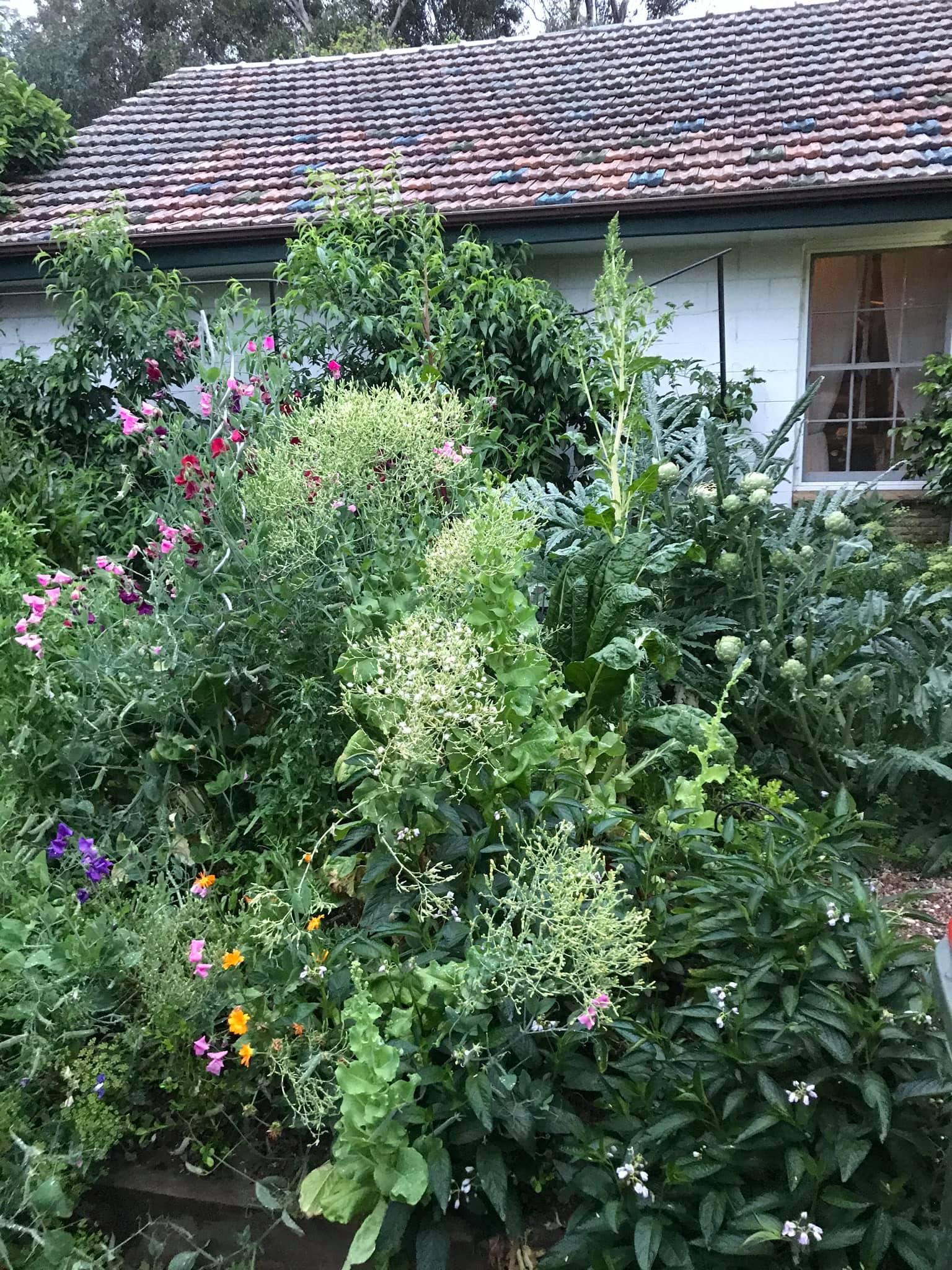 Khu vườn rộng 575m² xanh tươi đủ loại rau quả sạch giữa thành phố của người đàn ông thích trồng cây từ năm 9 tuổi - Ảnh 10.