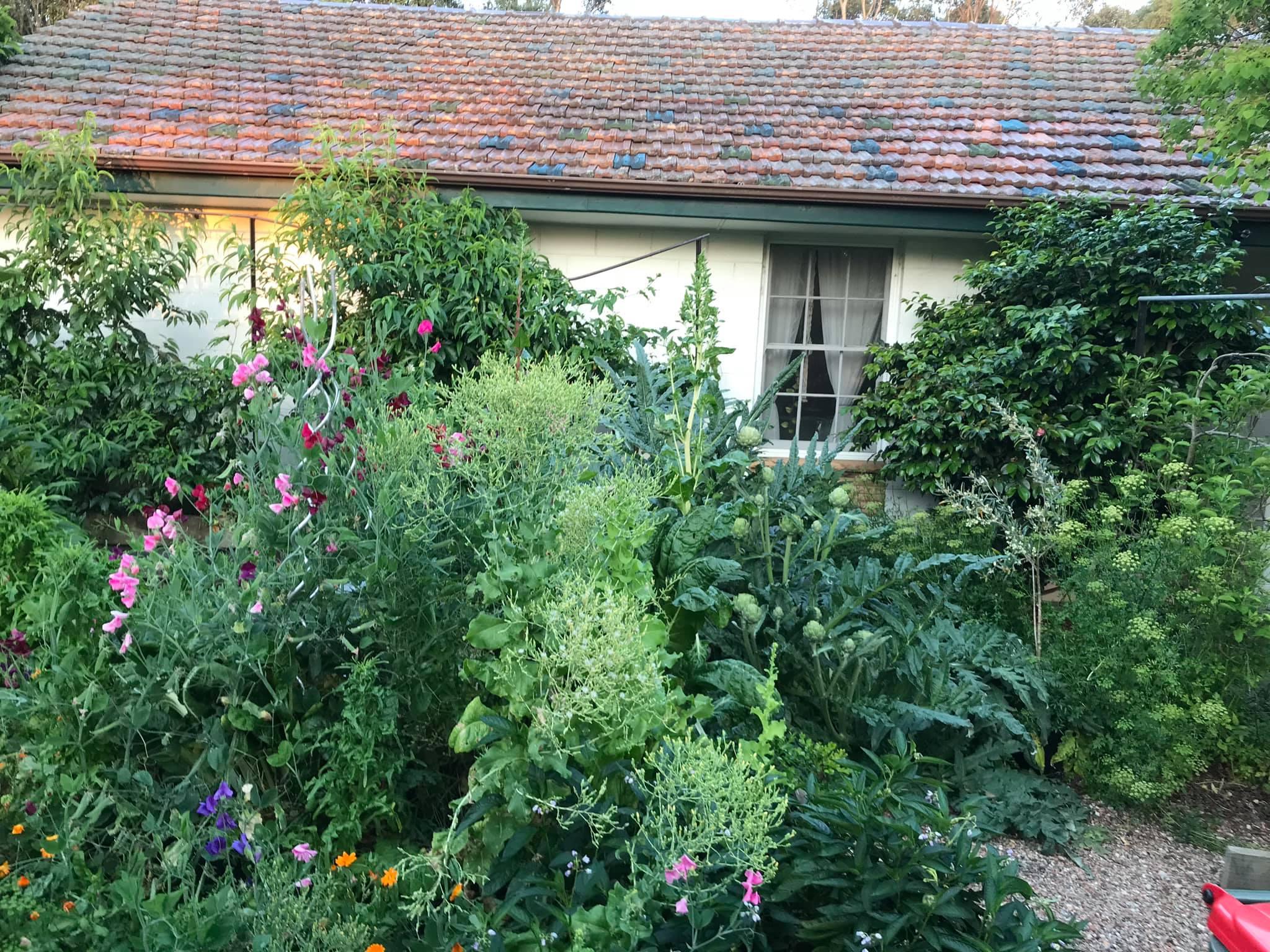 Khu vườn rộng 575m² xanh tươi đủ loại rau quả sạch giữa thành phố của người đàn ông thích trồng cây từ năm 9 tuổi - Ảnh 3.