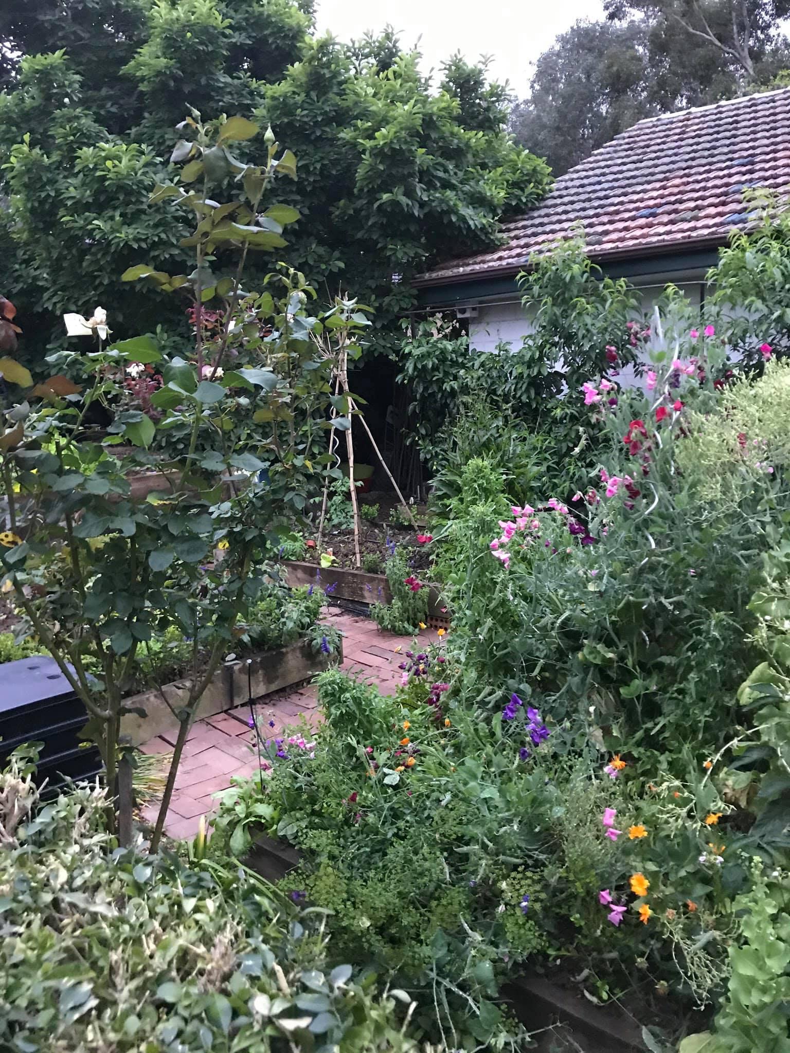 Khu vườn rộng 575m² xanh tươi đủ loại rau quả sạch giữa thành phố của người đàn ông thích trồng cây từ năm 9 tuổi - Ảnh 17.