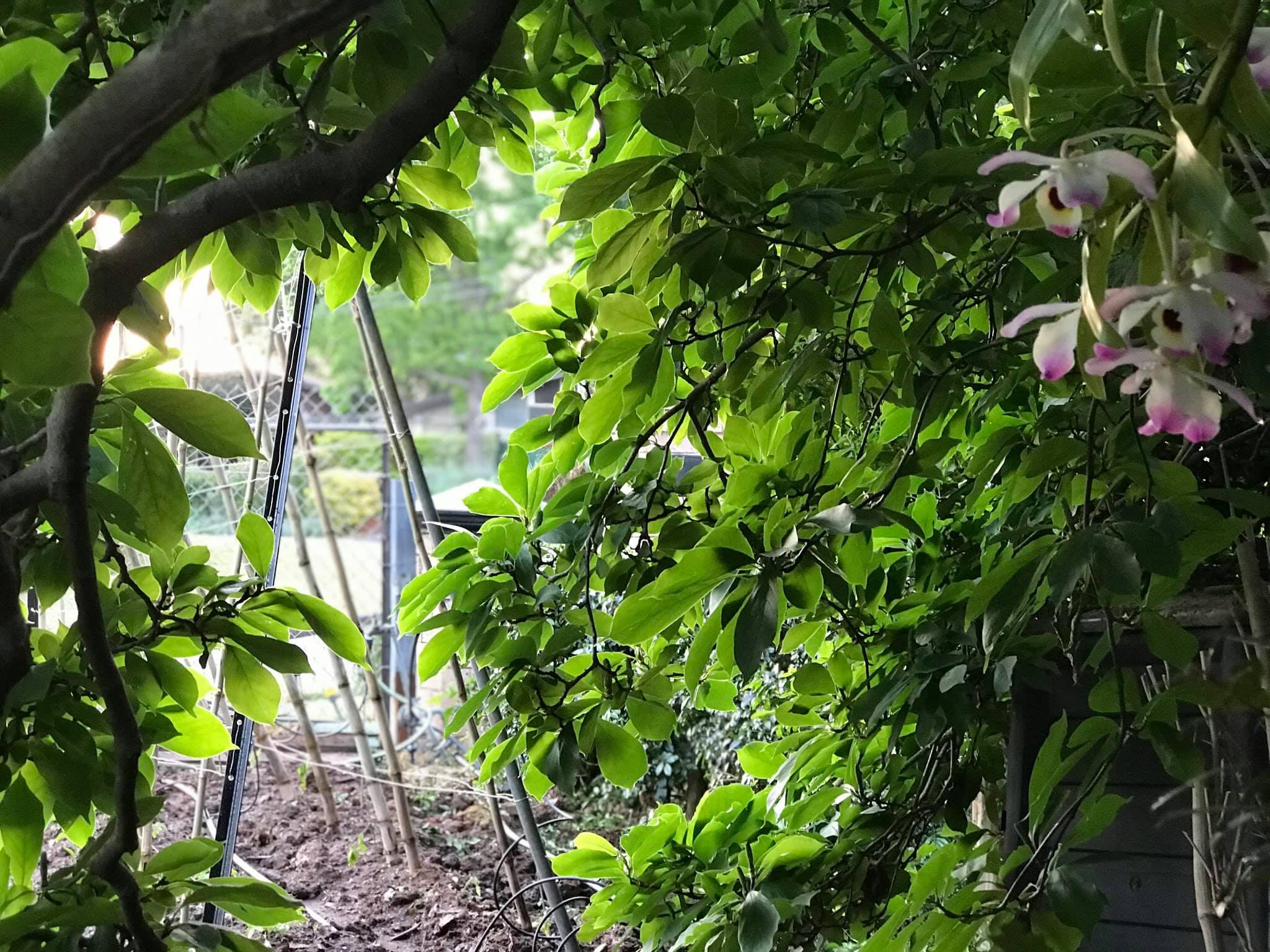 Khu vườn rộng 575m² xanh tươi đủ loại rau quả sạch giữa thành phố của người đàn ông thích trồng cây từ năm 9 tuổi - Ảnh 4.