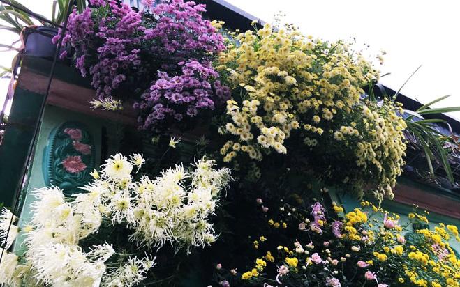 Ngôi nhà ngập tràn sắc màu hoa cúc đẹp lãng mạn của cô giáo phố núi Sơn La