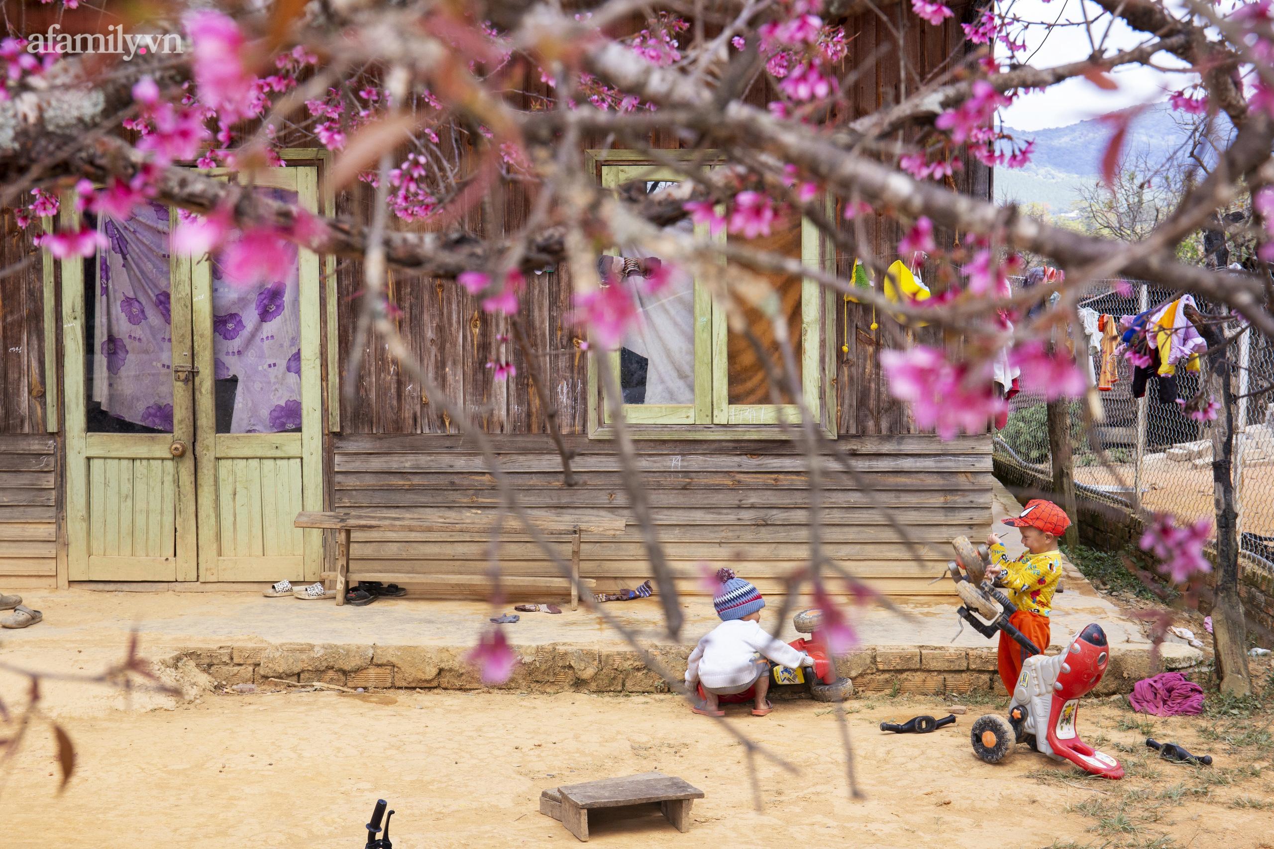 Ngắm hoa mai anh đào nở rợp trời ở ngôi làng đẹp lạ như Tây Tạng, nằm ngay gần trung tâm TP. Đà Lạt mà không phải ai cũng biết - Ảnh 6.