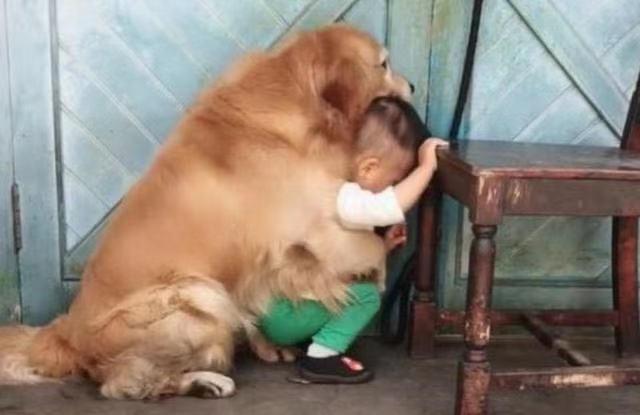"""Con trai nhỏ mắc lỗi bị bố giơ gậy dọa đánh, anh chưa kịp làm gì thì chú chó đã lao đến và có một hành động khiến người xem """"lịm tim"""" - Ảnh 2."""