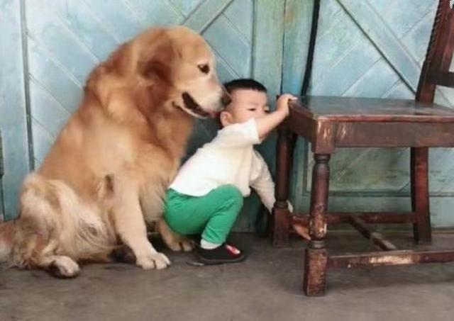 """Con trai nhỏ mắc lỗi bị bố giơ gậy dọa đánh, anh chưa kịp làm gì thì chú chó đã lao đến và có một hành động khiến người xem """"lịm tim"""" - Ảnh 3."""