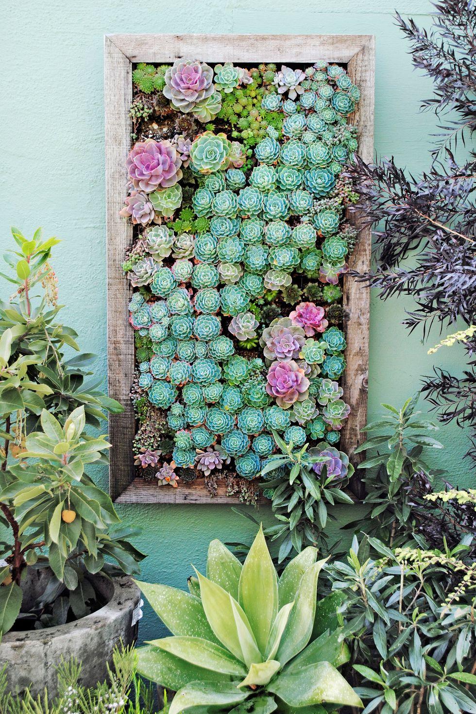 Những khu vườn thẳng đứng dễ thiết kế tạo màu xnh tươi mát cho ngôi nhà củ bạn - Ảnh 6.