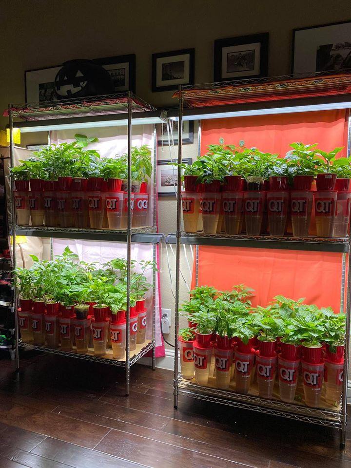 Khu vườn 1000m2 đủ loại rau Việt do con gái tặng mẹ trên đất Mỹ - Ảnh 21.