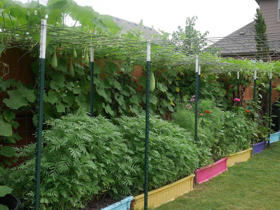 Khu vườn 1000m2 đủ loại rau Việt do con gái tặng mẹ trên đất Mỹ - Ảnh 4.