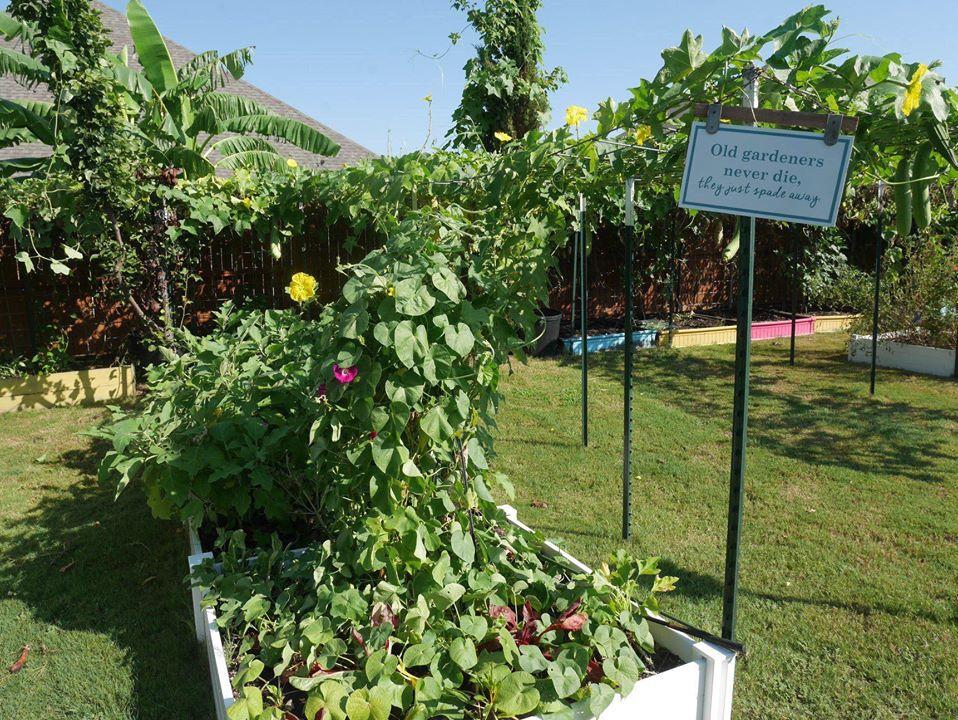 Khu vườn 1000m2 đủ loại rau Việt do con gái tặng mẹ trên đất Mỹ - Ảnh 12.