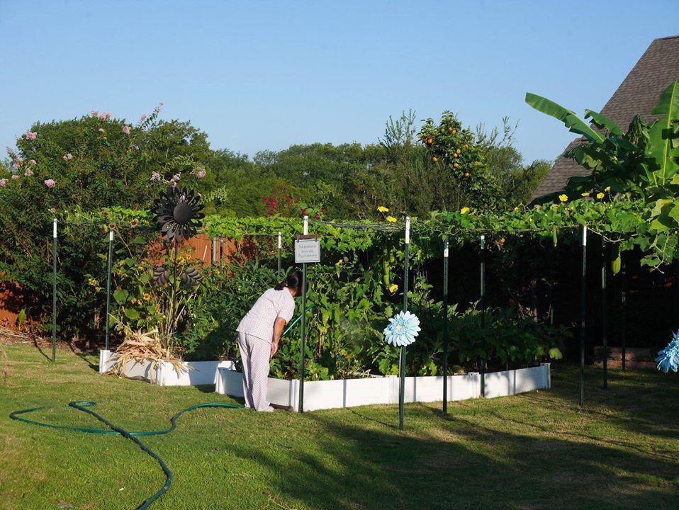Khu vườn 1000m2 đủ loại rau Việt do con gái tặng mẹ trên đất Mỹ - Ảnh 1.