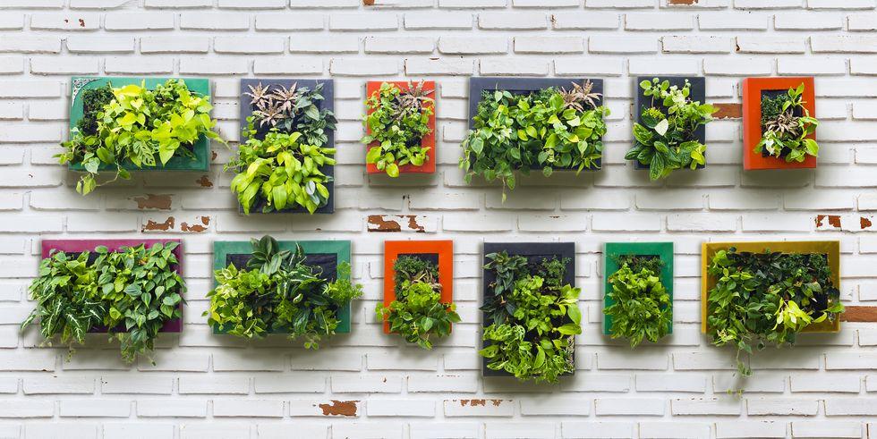 Những khu vườn thẳng đứng dễ thiết kế tạo màu xnh tươi mát cho ngôi nhà củ bạn - Ảnh 1.