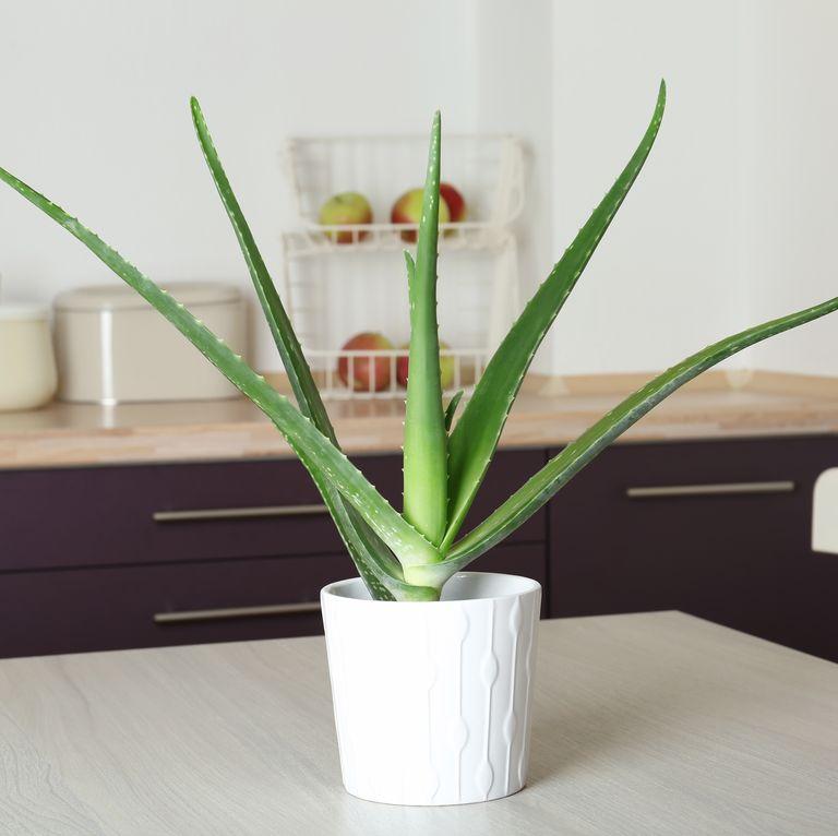 Gợi ý những loại cây tốt nhất có thể trồng trong nhà bếp để làm sáng không gian nhà bạn - Ảnh 1.