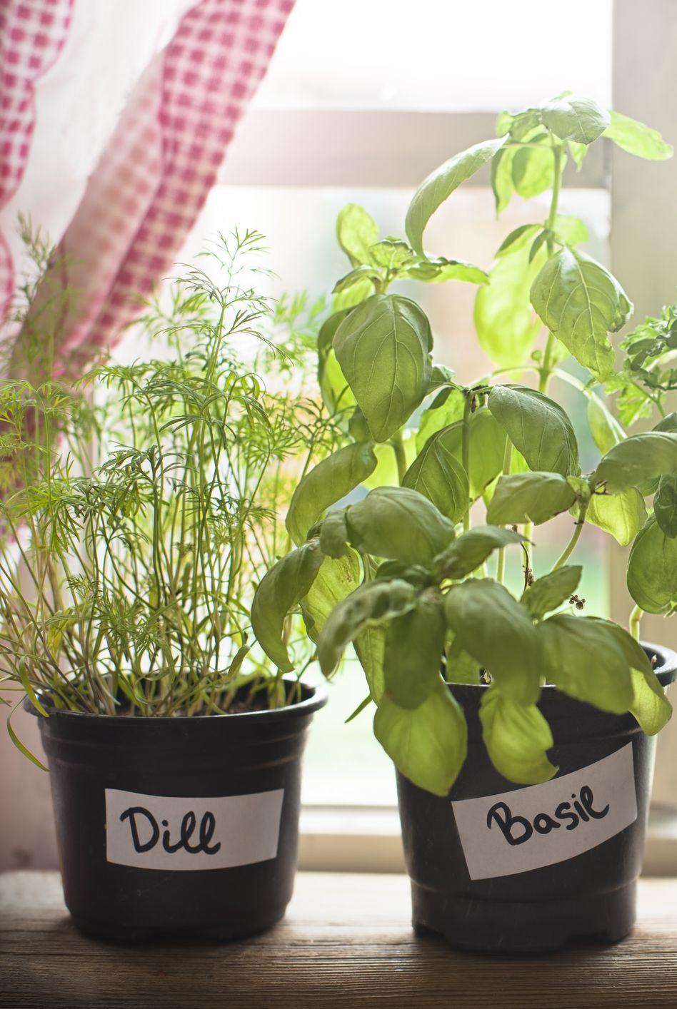 Gợi ý những loại cây tốt nhất có thể trồng trong nhà bếp để làm sáng không gian nhà bạn - Ảnh 2.