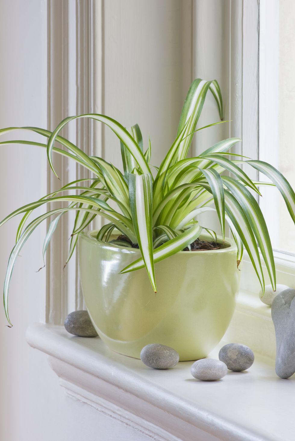 Gợi ý những loại cây tốt nhất có thể trồng trong nhà bếp để làm sáng không gian nhà bạn - Ảnh 9.