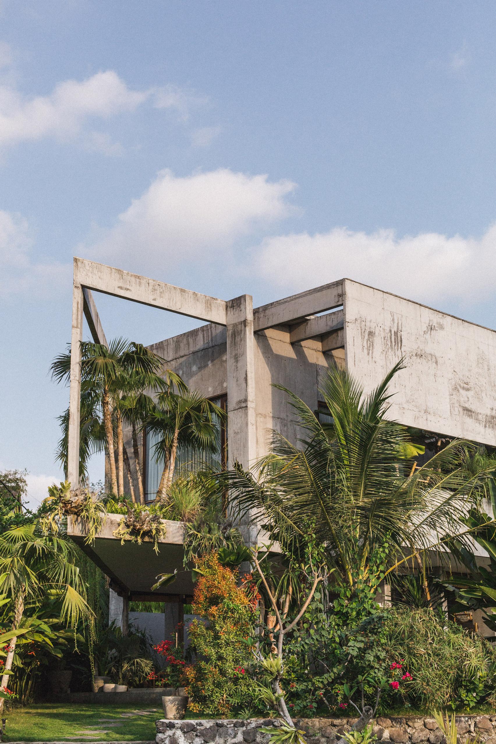 Ngôi nhà đầy sắc màu nhiệt đới với cây xanh phủ kín mọi góc nhìn - Ảnh 1.