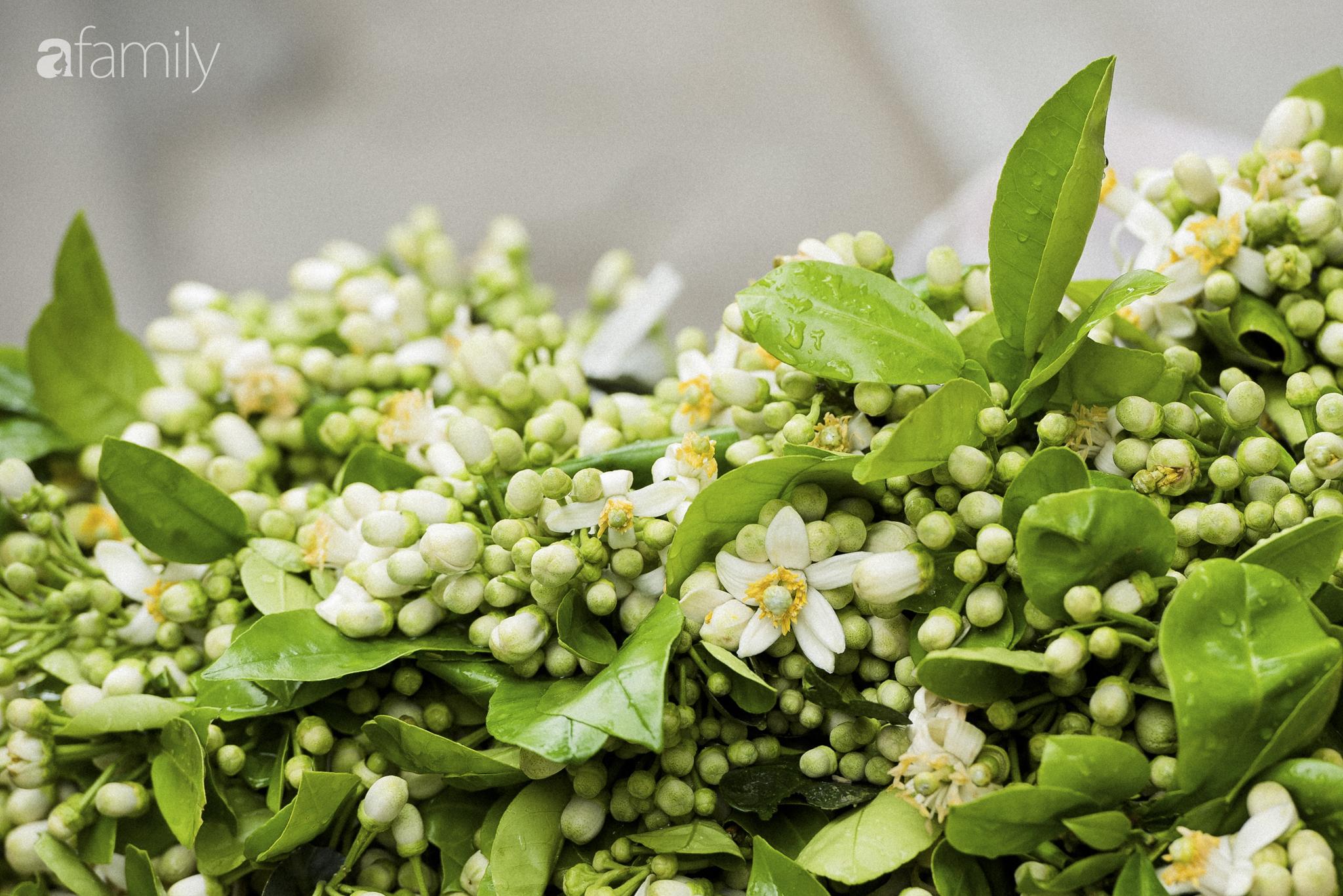 """Hoa bưởi - loài hoa quê kiểng """"ướp"""" thơm chốn kinh kỳ tháng Giêng hai - Ảnh 4."""