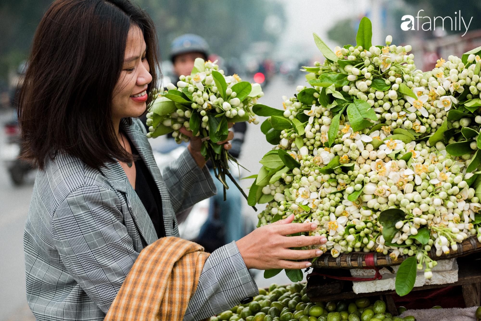 """Hoa bưởi - loài hoa quê kiểng """"ướp"""" thơm chốn kinh kỳ tháng Giêng hai - Ảnh 1."""