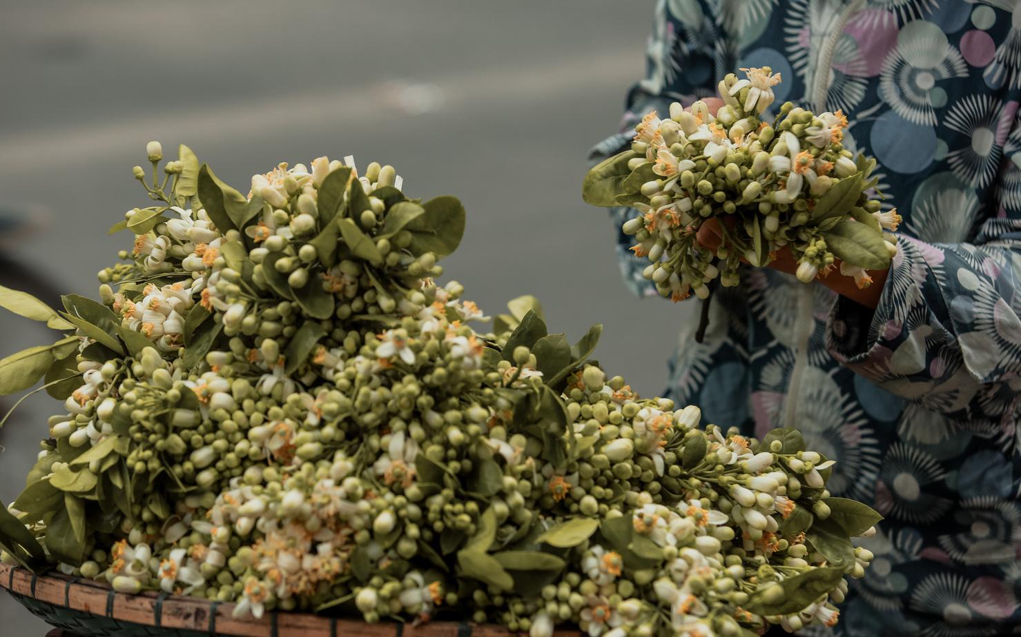 Chùm ảnh: Cuối tháng Giêng, giữa phố phường Hà Nội bỗng bắt gặp hương bưởi, phả vào trong gió se