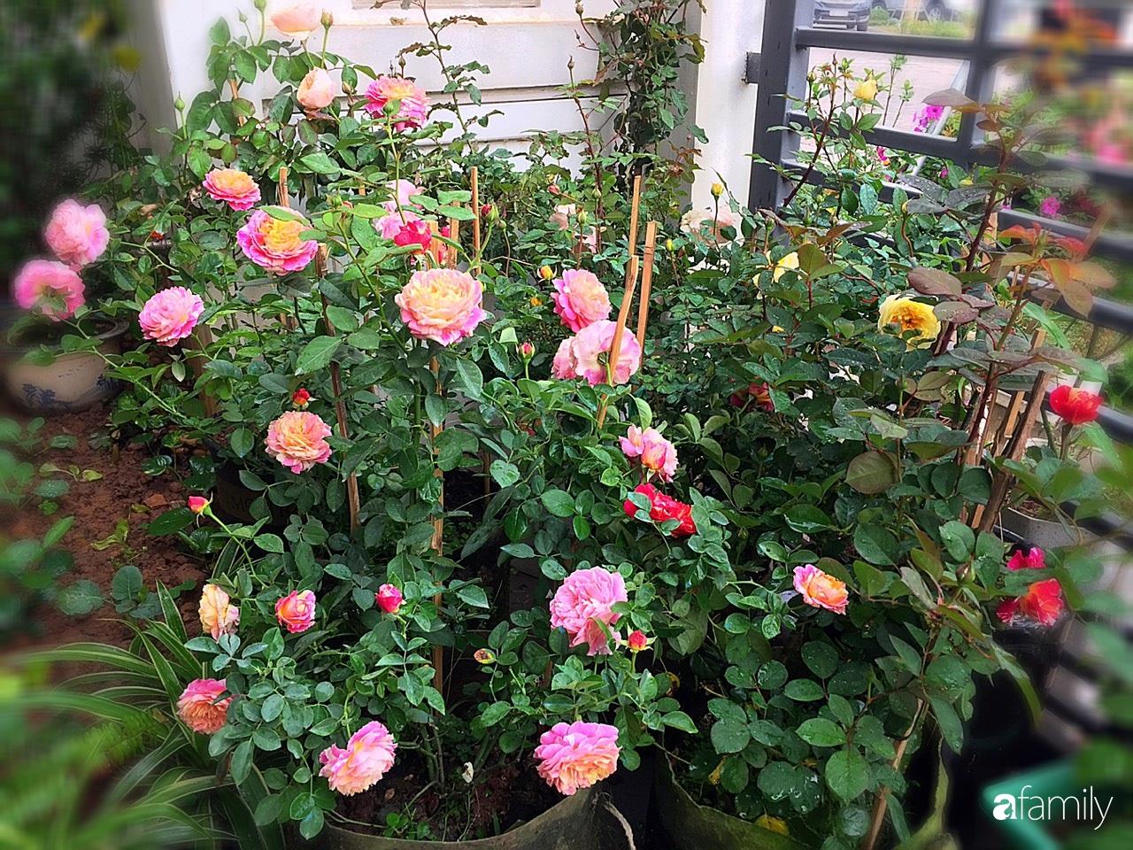Không gian sống ngát hương bên khu vườn ngập tràn nắng ấm và rực rỡ sắc hoa ở Hà Nội - Ảnh 7.