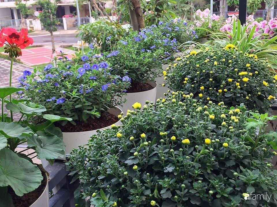 Không gian sống ngát hương bên khu vườn ngập tràn nắng ấm và rực rỡ sắc hoa ở Hà Nội - Ảnh 10.