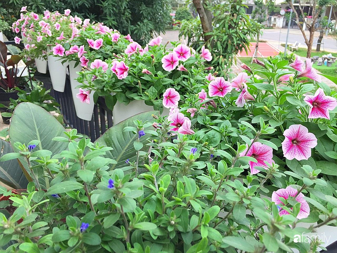 Không gian sống ngát hương bên khu vườn ngập tràn nắng ấm và rực rỡ sắc hoa ở Hà Nội - Ảnh 9.