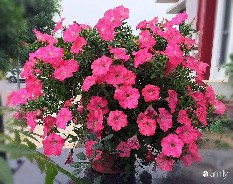 Không gian sống ngát hương bên khu vườn ngập tràn nắng ấm và rực rỡ sắc hoa ở Hà Nội - Ảnh 13.