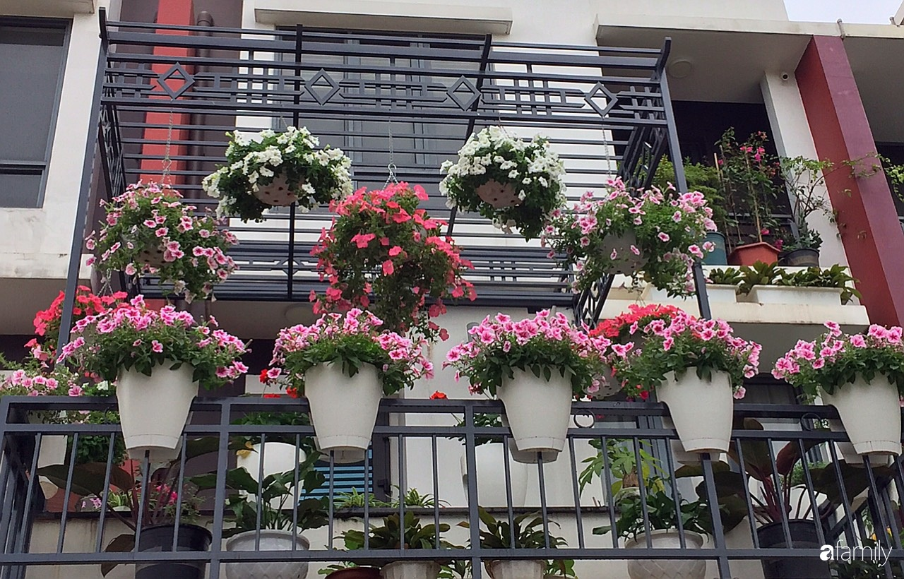 Không gian sống ngát hương bên khu vườn ngập tràn nắng ấm và rực rỡ sắc hoa ở Hà Nội - Ảnh 1.
