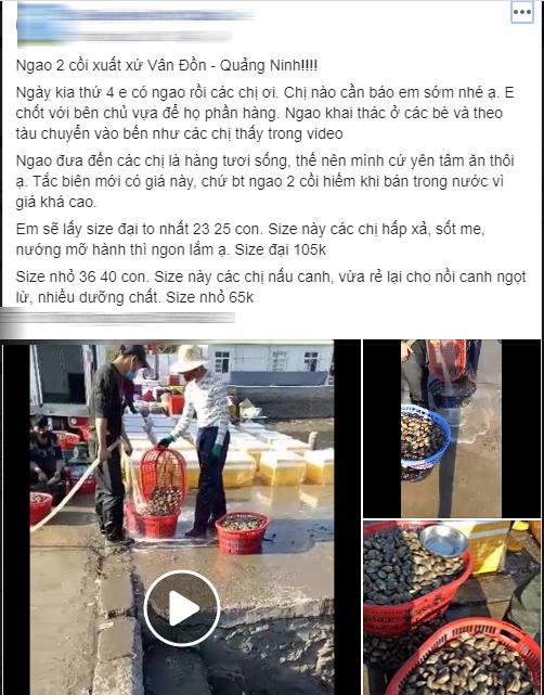 Thực hư ngao hai cùi Vân Đồn đang được bán giá rẻ giật mình, chỉ 65 ngàn đồng/kg rao khắp chợ mạng - Ảnh 2.