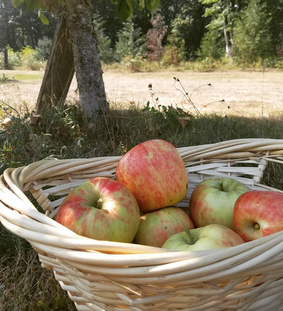 Cuộc sống hạnh phúc của mẹ trẻ xinh đẹp với công việc hàng ngày là chăm con và trồng rau quả sạch - Ảnh 20.