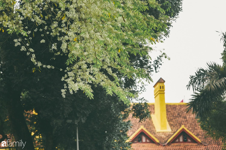 Mùa hoa sưa lại về trên phố, trắng rợp trời Hà Nội như bông mây ngọt ngào gọi mời tháng Ba - Ảnh 5.