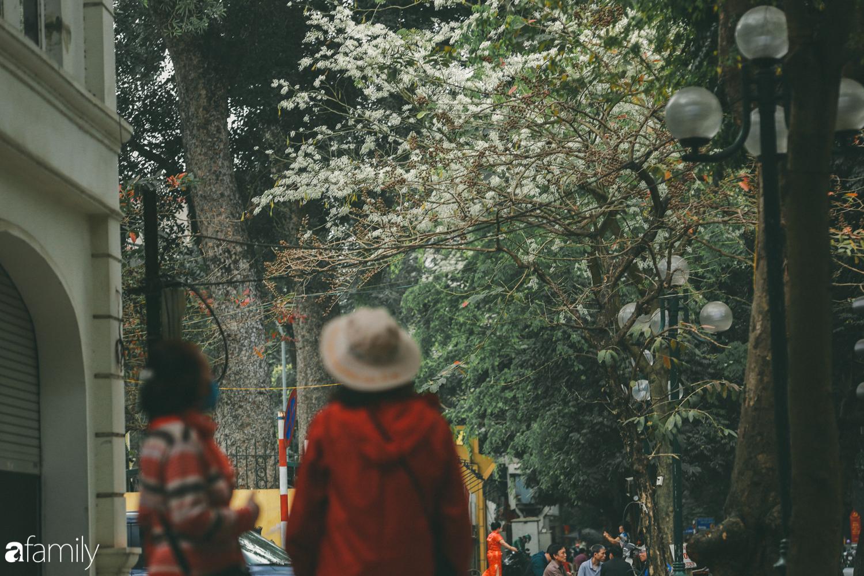 Mùa hoa sưa lại về trên phố, trắng rợp trời Hà Nội như bông mây ngọt ngào gọi mời tháng Ba - Ảnh 10.