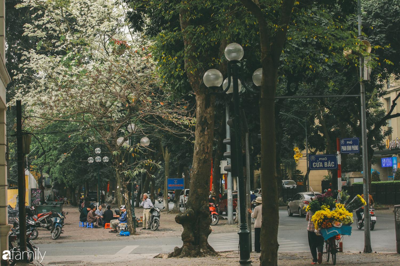 Mùa hoa sưa lại về trên phố, trắng rợp trời Hà Nội như bông mây ngọt ngào gọi mời tháng Ba - Ảnh 1.