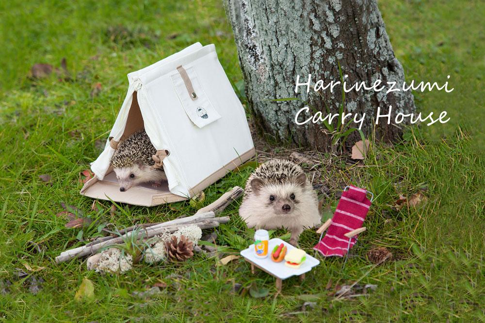 Túi đeo vai sành điệu: Sản phẩm mới nhất giúp chị em mang theo thú cưng tới mọi nơi, mọi lúc - Ảnh 2.