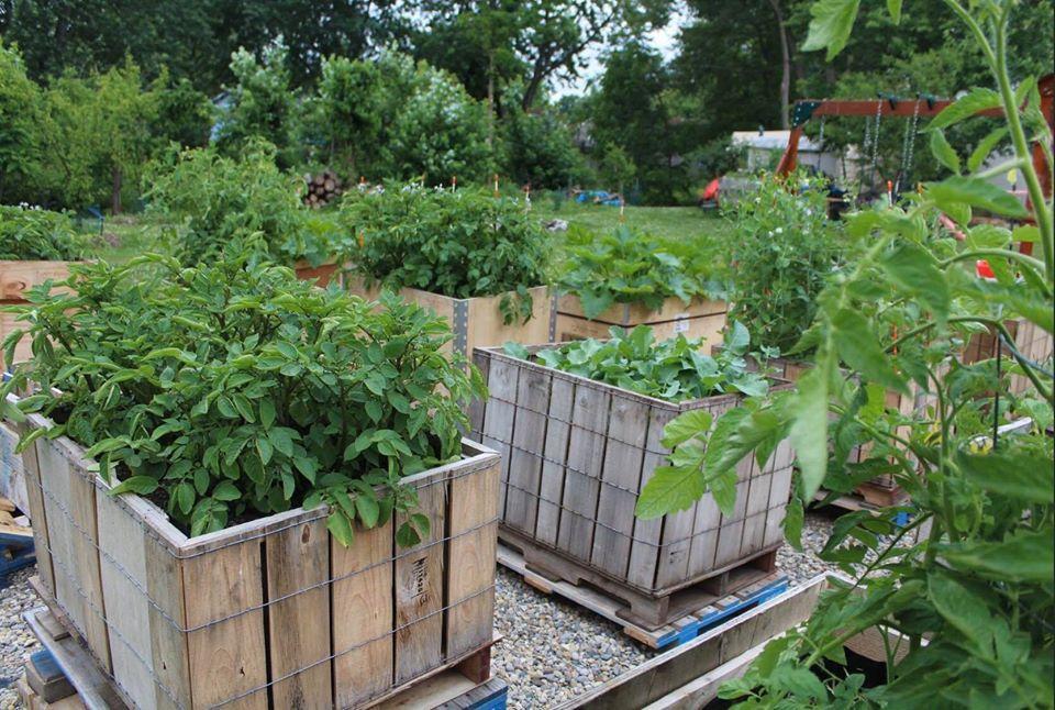 Khu vườn xanh tươi của ông bố cặm cụi trồng giúp 3 cô con gái xinh đẹp có thêm bài học hay về cuộc sống - Ảnh 5.
