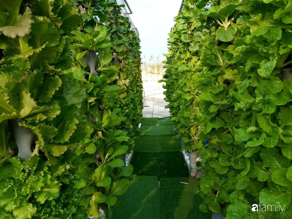 Khu vườn thẳng đứng xanh mướt rau sạch trên nóc chung cư ở TP. HCM - Ảnh 9.